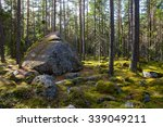 View Of Huge Pine Trees In A...
