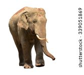 asia elephant isolated on white ... | Shutterstock . vector #339051869