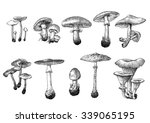 Drawn Mushroom Drawing