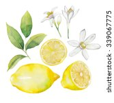 Watercolor Lemon Collection. ...