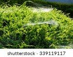 Cobweb On Bushes Outdoors