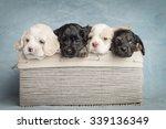 cute puppy   Shutterstock . vector #339136349