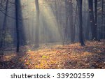 sunbeams pour into the autumn... | Shutterstock . vector #339202559