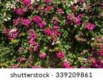 Pink Flowers On A Bush. Turkey...