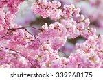 Symbol Of Springtime  Twigs...
