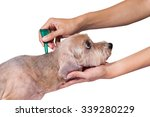 tick and flea prevention for a... | Shutterstock . vector #339280229