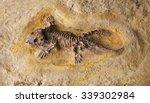 Fossil Of Prehistoric Lizard...