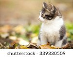 Stock photo little kitty in the fall foliage 339330509