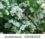 jasmine | Shutterstock . vector #339482519