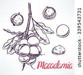 macadamia sketch tree branch... | Shutterstock .eps vector #339543731