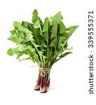 dandelion  dandelion green ... | Shutterstock . vector #339555371