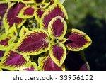 nettle   Shutterstock . vector #33956152