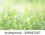 green bokeh on grass in the... | Shutterstock . vector #339567107