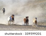 Small photo of Dust Bowl Wild Horses running to the watering hole