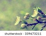 blooming cherry  flowers....   Shutterstock . vector #339673211