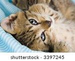 kitty | Shutterstock . vector #3397245