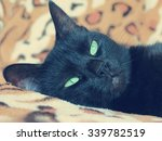 black cat lying on spotted sofa ... | Shutterstock . vector #339782519