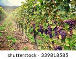 landscape with autumn vineyards ... | Shutterstock . vector #339818585