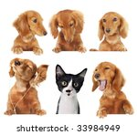 Stock photo funny kitten surrounded by dogs 33984949