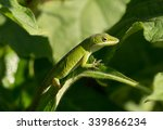A Vivid Colored Green Anole...