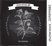 echinacea aka purple coneflower ... | Shutterstock .eps vector #339899885