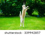 Stock photo funny red cat jumping on green grass 339942857