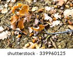 oaken leaves and acorns. close... | Shutterstock . vector #339960125