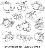 collection of hand drawn fruits ... | Shutterstock .eps vector #339984965