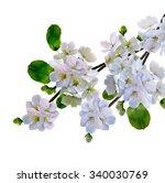 white apple flowers branch...   Shutterstock . vector #340030769