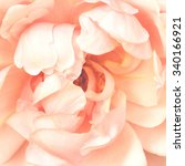pink rose close up background | Shutterstock . vector #340166921