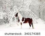 Beautiful Paint Draft Horse In...