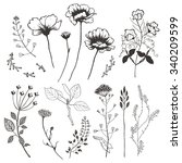 Wildflowers And Plants. Hand...