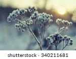Frozen Meadow Plant  Natural...