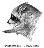 wild raccoon  | Shutterstock . vector #340224851