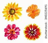 set of garden flowers in yellow ... | Shutterstock . vector #340225691