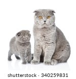Mother Cat And Little Kitten...