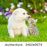 Puppy And Kitten Kissing On Th...