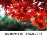 autumn fall foliage color of a... | Shutterstock . vector #340267745