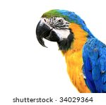 blue and yellow macaw   ara... | Shutterstock . vector #34029364
