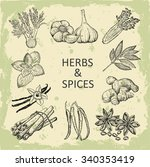 herbs and spices. hand drawn... | Shutterstock . vector #340353419