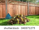 Leaves Raked Into A Pile In A...