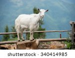 Goat On A Pasture In Carpathians