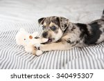 adorable gray and black terrier ... | Shutterstock . vector #340495307