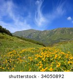 Meadow in mountains with yellow flowers - stock photo