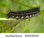 big shaggy caterpillar close up.... | Shutterstock . vector #34053034