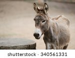 Portrait Of A Donkey On Farm.