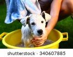 Kids Wash Stray White Puppy In...