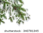 Fir Branch In Snow Isolated On...