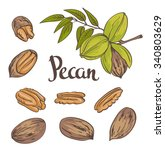 Green Pecan Nuts With Leaves...