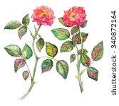pair of watercolor pink roses... | Shutterstock . vector #340872164